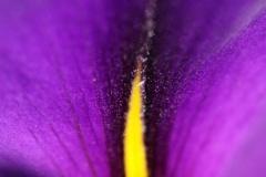 Velvet-Flower